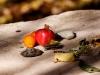 Cumquat and Pomegranate