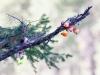 Bobber tree :). Woods Canyon Lake, Mogollon Rim.