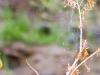 Spiderweb. Aravaipa.