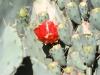 img_2896_desertbotgard_2012_05